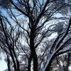 для Москвы - зима крассотка 03 :: Kriss Ампар