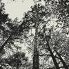 лес :: Таня Новикова