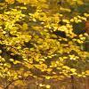 Краски Осени... :: mirtine