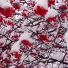 выпал первый снег :: Светлана Бурлина