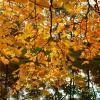 Осенний этюд. :: VasiLina *