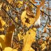 Просто «Осень»...) :: VADIM *****