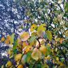 Осенние листья :: Татьяна Королёва