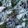 Стало листикам теплее :: Raduzka (Надежда Веркина)
