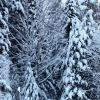 Зима :: Дмитрий Арсеньев