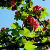 майское цветение :: Евгений БРИГ и невич
