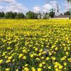 Весна ярославская, возле Толгского монастыря :: Николай Белавин