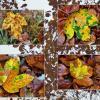 Осень, цвета и формы .... :: Heinz Thorns
