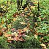 Лесной этюд. :: Валерия Комова