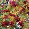 Осень в Воронцово... :: Наташа *****