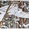 Снег-лежебока-) :: Любовь Чунарёва