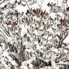 После недавнего снегопада :: Екатерина К.