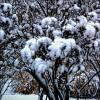 В городе снег :: Сергей Порфирьев