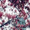 Цветы :: Nata Potapova