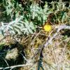 Так вот ты какой,аленький цветочек. :: Андрей Хлопонин