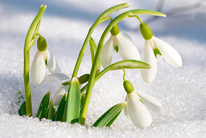Фотоконкурс «Весна красна»
