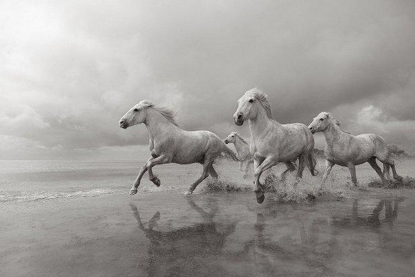 Фотограф Дрю Доггетт