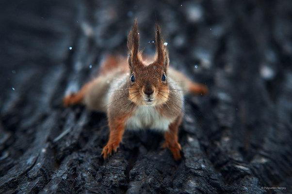 Портреты животных от фотографа Сергея Полюшко