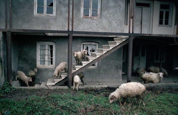 Фотограф Дмитрий Гомберг