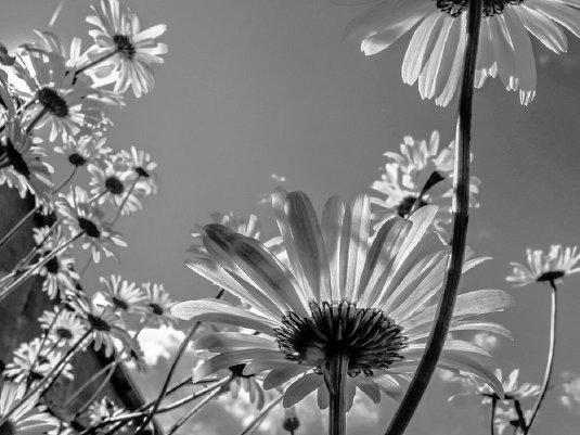"""Студенческое фото недели: """"Оттенки белого"""", Ивашкина Надежда http://disted.ru/"""