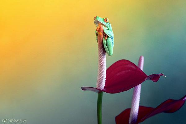 Фотограф Wil Mijer