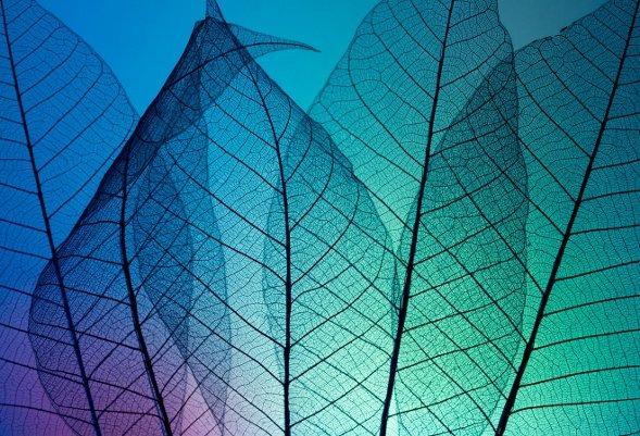 Абстрактное искусство в простых листьях