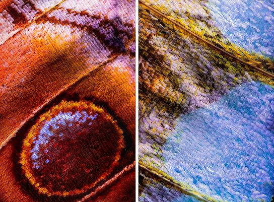 «Крылья бабочек». Фотограф Крис Перани