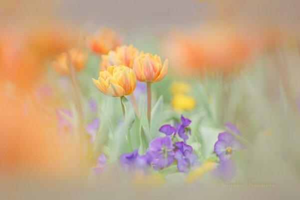 Цветы - главные герои кадра