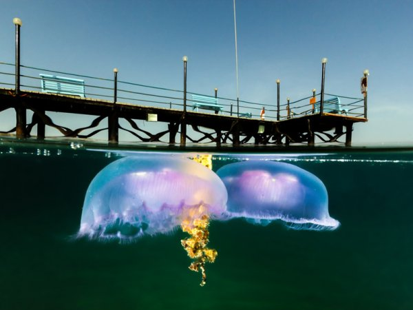 фото подводного мира