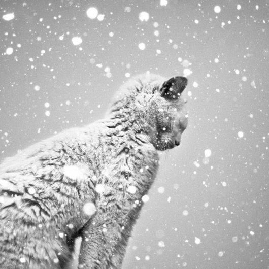 зимняя погода фото