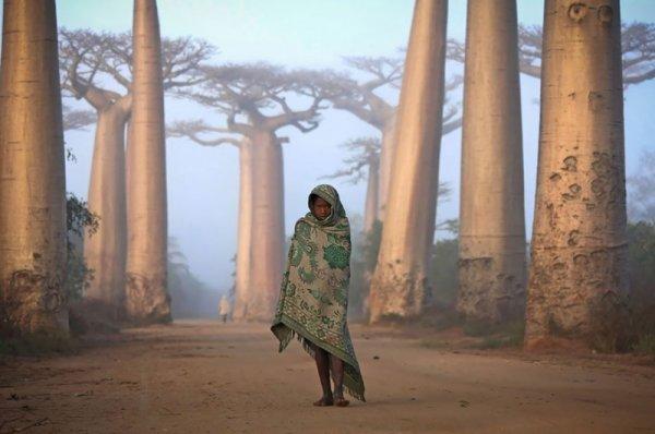 Девочка на фоне баобабов, Мадагаскар - эмоции человека фото