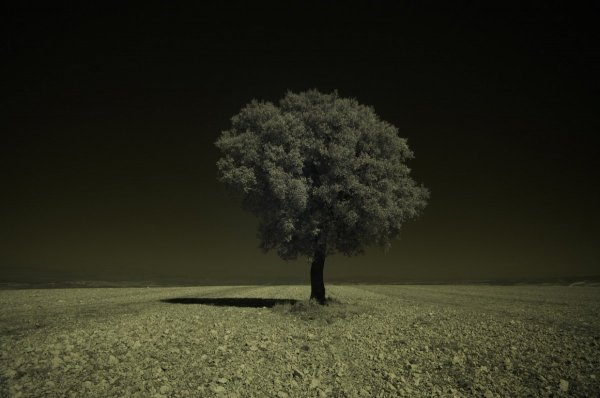 Инфракрасное фото