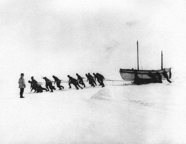 обитатели антарктиды фото