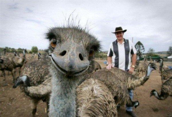 Самый доброжелательный страус. :)