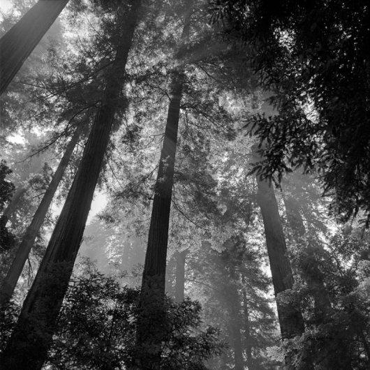 """Фотограф Вивиан Майер (Vivian Maier) (рубрика """"Вдохновение"""") - №12"""