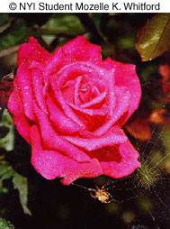 flowere0304