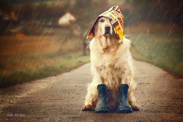 .. Как и люди — собаки тоже умеют любить, а главное - дружить..!!! :) - №5