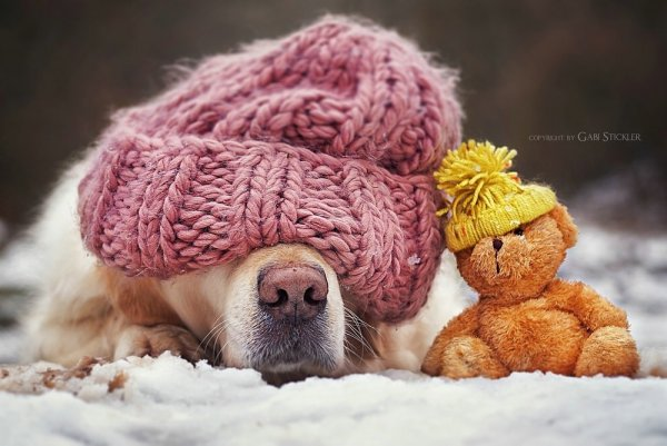 .. Как и люди — собаки тоже умеют любить, а главное - дружить..!!! :) - №3