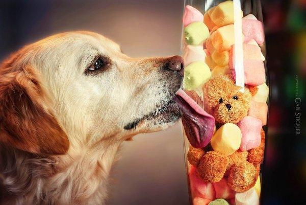 .. Как и люди — собаки тоже умеют любить, а главное - дружить..!!! :) - №11