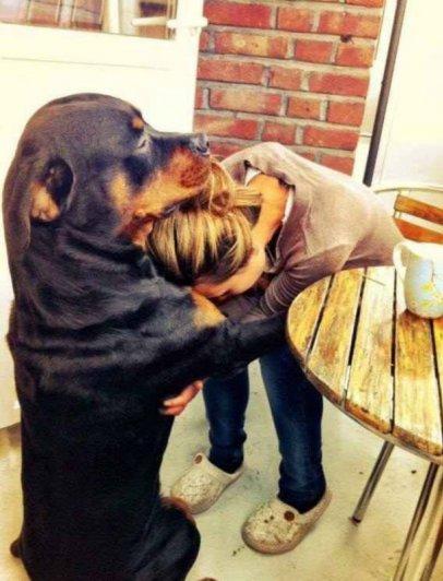 фотографии домашних собак