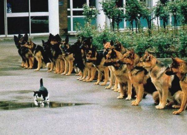 секрет хорошей дисциплины