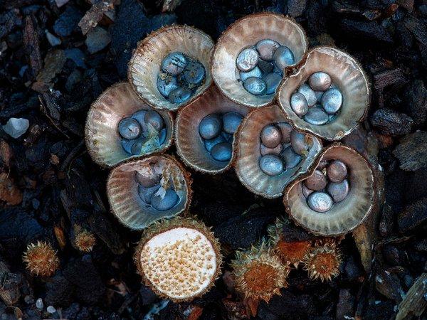 разные виды грибов на фото 15