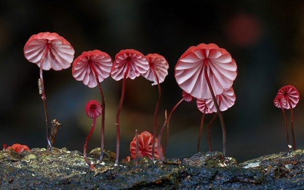 разные виды грибов на фото 23