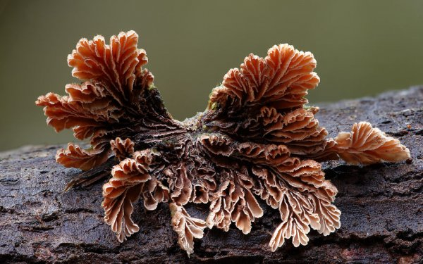 разные виды грибов на фото 8