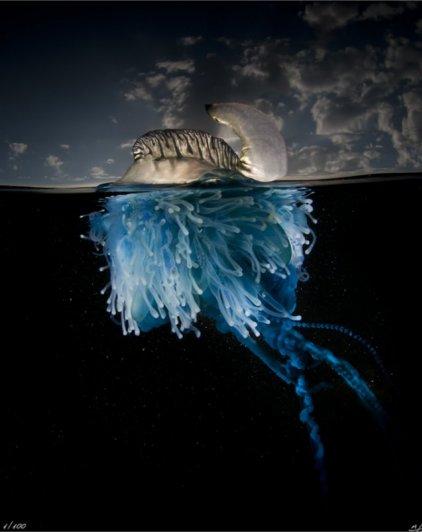 фото морских жителей 1