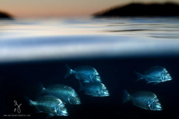фото морских жителей 5