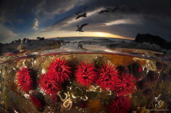 фото морских жителей 9