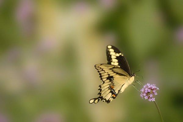 how-to-photograph-butterflies