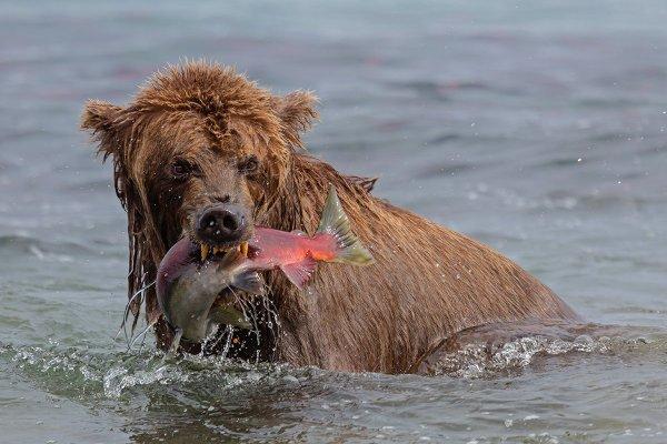 На рыбалке. Автор: Денис Будьков