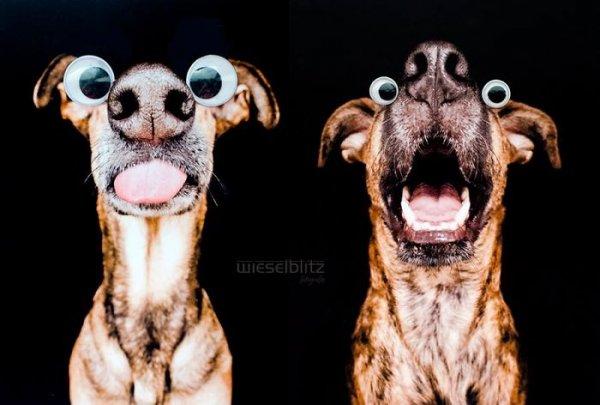 фотографии крупных собак в коллаже